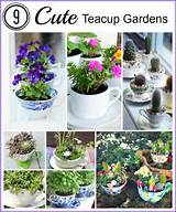 Cute Tea Cup Gardens - A Cultivated Nest