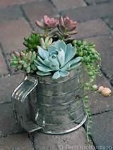 Succulent garden in a sifter. | Garden Ideas | Pinterest