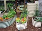 snowpea permaculture gardens suffolk park community garden