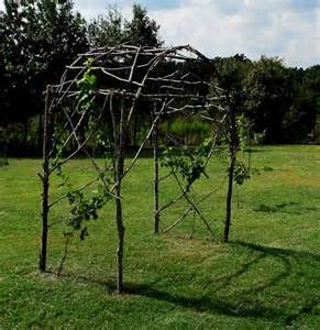 grape trellis from branches