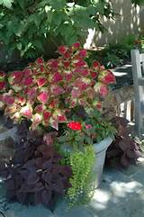 be inspired fall and winter container ideas october 26 at 11 30am