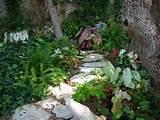 caladiums garden ideas pinterest