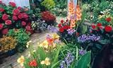 Oplemenite vaše terese ili dvorište cvećem u saksijama | BravaCasa ...