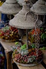 Creative Succulent Container Garden Ideas | Pinaholic Myrie