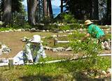 South Tahoe gardeners celebrate 50 years of playing in dirt | Lake ...
