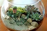 Miniature gardens are perfect terrariums.