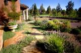 high desert flower garden high desert landscaping