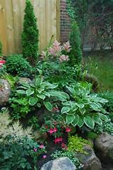 beautiful landscaping hostas garden hostas shade plants