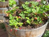 vegetable container gardening how my tips and tricks