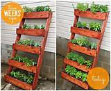 Pin by Ginger @ GingerSnapCrafts.com on Herb Garden Ideas | Pinterest