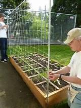 Garden Trellis: Tomato Trellis Vegetable Trellis Vertical Gardening ...