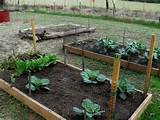 Fall Gardening in Texas is Wonderful and those raised beds are pretty ...