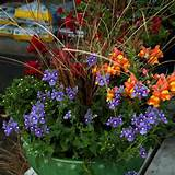 fall container gardening picture of fall planter with snapdragons that