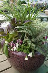 ... container - Southern Winter Container Idea / Armstrong Garden Centers
