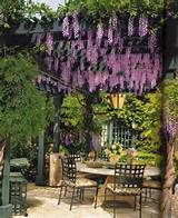 Life & Home at 2102: Making our Wisteria-filled pergola a reality