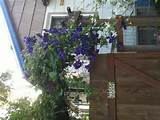 garden gate garden ideas pinterest