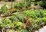 Garden Ideas: What to plant in a pallet garden ideas pallet garden ...