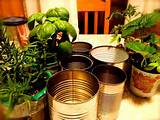 coffee cans for planters | Coffee Can Garden | Pinterest