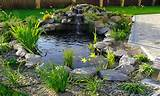 Fish Pond Design Ideas: Backyard Pond Designs Small