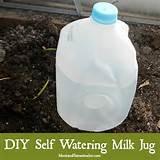 diy self watering milk jug for deep watering in garden or greenhouse