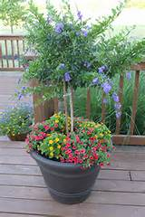love the little tree container gardening ideas pinterest