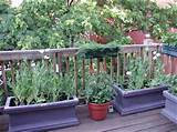 Add Greenery To A Deck Area With Deck Planters