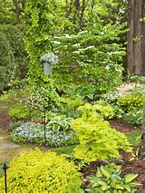 gardens shades plants gardens landscape ideas yard gardens ideas