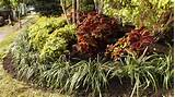 perennial garden ideas sun native garden design