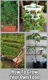 ... Your Own Food – 10 Gardening Ideas for the Beginner | DIY Cozy Home