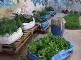 ideas for a community garden garden dreams pinterest