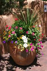 Full Sun Plants, Container Gardening Ideas, Flowers Plants, Container ...