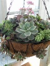 Hanging succulent Garden | Craft Ideas | Pinterest