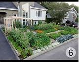 Edible Front Gardens. And How I Came Out As A Front Yard Veg Grower