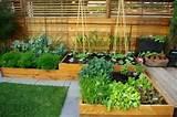 Vegetable Garden Trellis Designs - Gallery House Design - Gallery ...