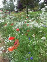 ... wildflower front garden ideas wildflower front garden ideas