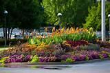 perennial flower garden design floriculture blackjack horticulture