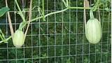 Best Garden Trellis Design Ideas Simple Frugal - Home and Garden ...