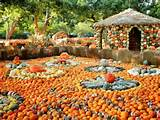 pumpkin village at dallas arboretum ideas designs beauty gardens