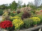 Fall Gardening ideas | Garden Beauty | Pinterest