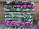 idée créative jardin vertical meubles en palettes pétunias rose