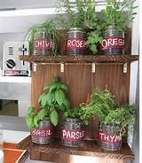 grow an indoor garden for delicious dips with fresh herbs home