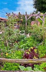 Vegetable Garden | Veggie Garden Ideas | Pinterest