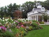 Wildflower Garden Ideas | My Garden | Pinterest