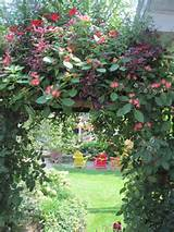 The Secret Garden | Beautiful gardens and ideas | Pinterest