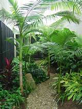 tropical jungle side yard yard ideas pinterest