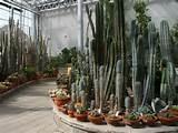 luxurious cactus garden tenerife