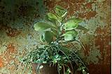 Indoor Container Gardening - Southern Living