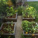 graceful backyard vegetable garden box 427887 home design ideas
