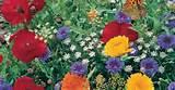 perennial garden plants full sun