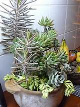 Succulent garden ideas for indoors and outdoors